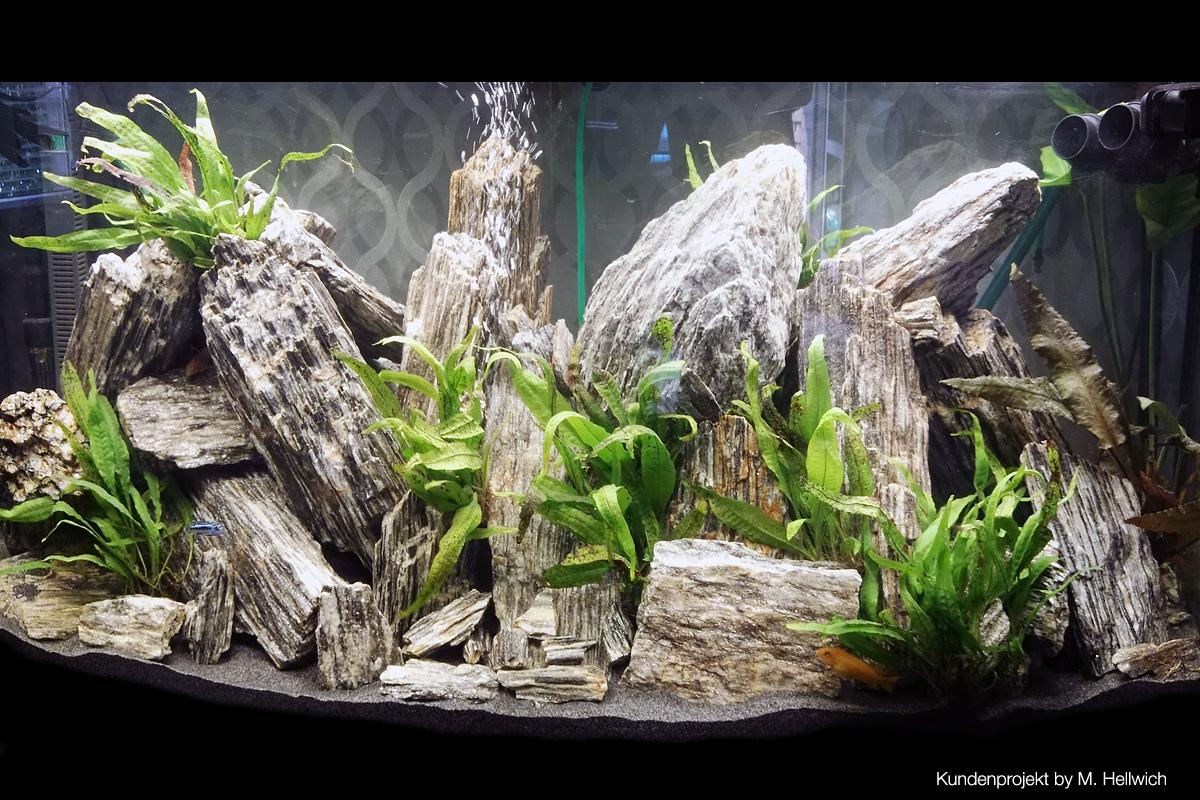 aquascaping steine woodstone f r aquarium. Black Bedroom Furniture Sets. Home Design Ideas